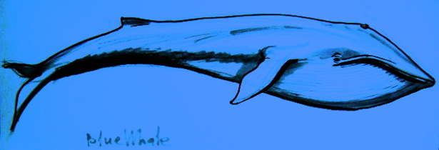 Blue Whale colored pictire