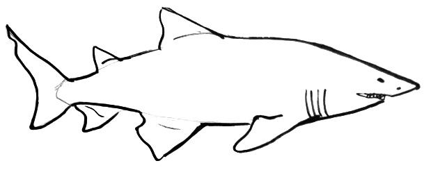 Great White Shark Outline