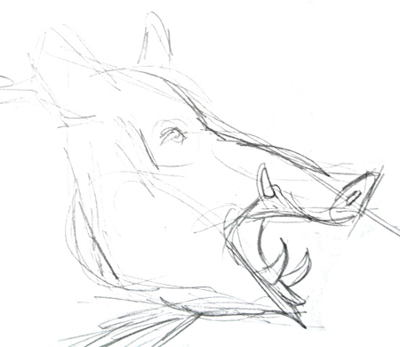 Boar head pencil sketch