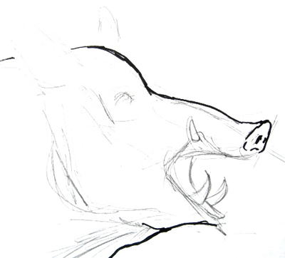Wild hog head drawing