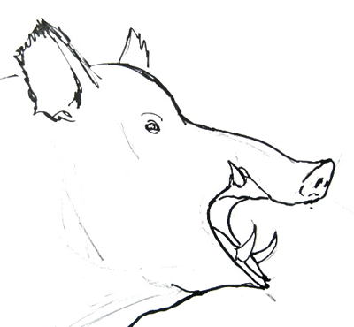 Wild boar head drawing