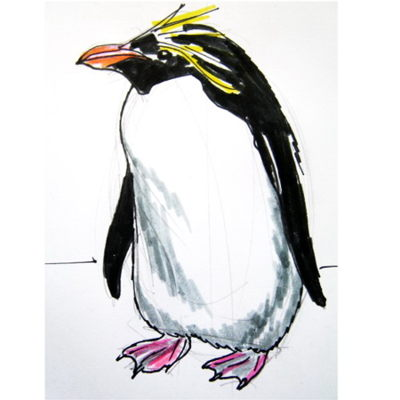 Macaroni penguin colored picture.