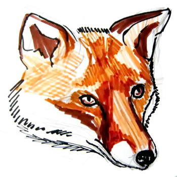 How To Draw Fox Head And Face