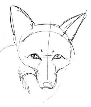 Fox  face drawing lesson