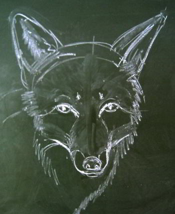 Fox head drawing  with chalk