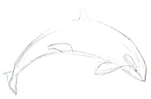 Killer whale pencil sketch