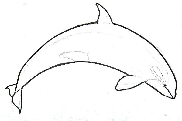 Killer whale line drawing