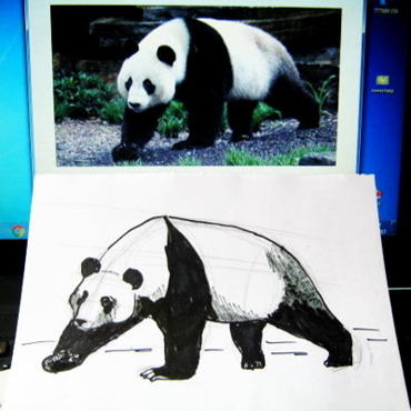 How to draw a Panda tutorial