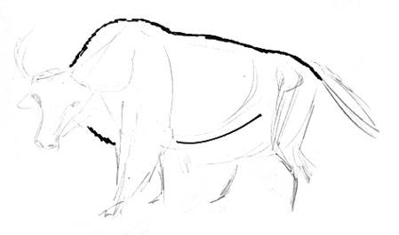 Yak body drawing