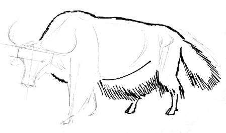 Yak drawing step by step