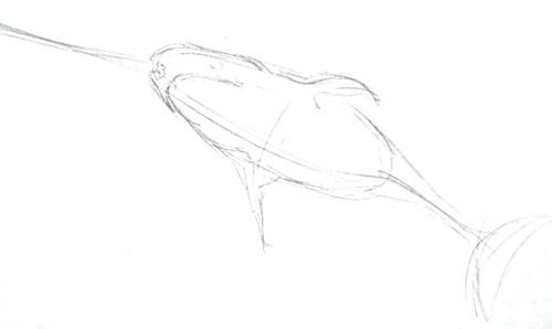 Narwhal pencil sketch