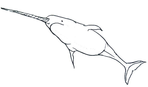 Narwhal outline
