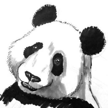 Panda head and face colored drawing.
