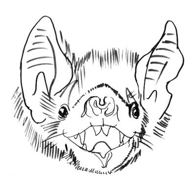 Bat`s head drawing