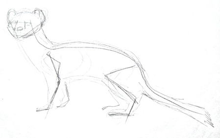 Ermine pencil sketch