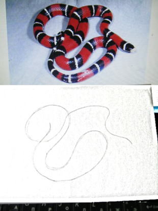 How to draw a coral snake