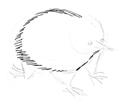 Echidna animal drawing