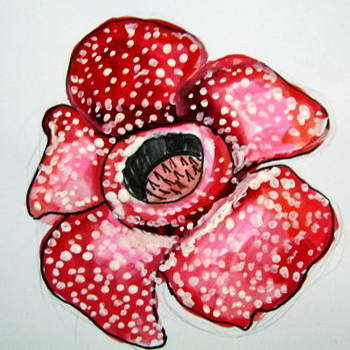 How to draw a Rafflesia flower tutorial
