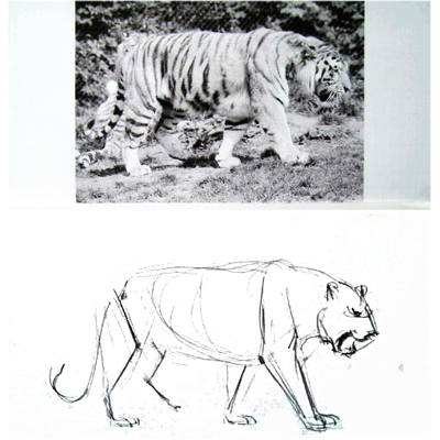 How to draw a Tiger tutorial