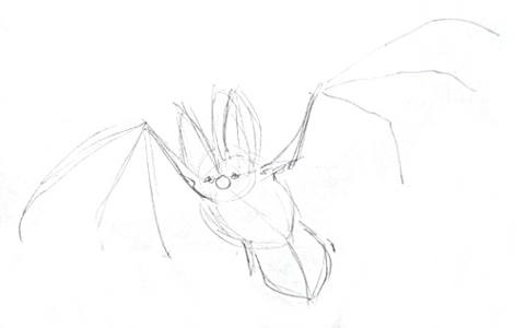 Bat pencil sketch