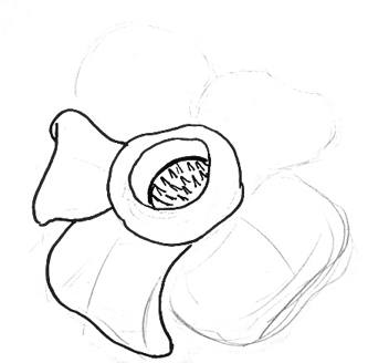 Rafflesia drawing step by step