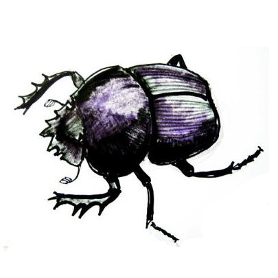 Scarab beetle drawing