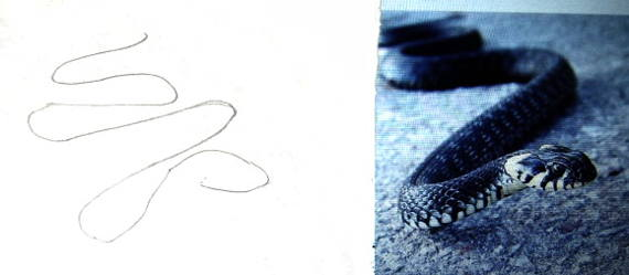 How to draw a grass snake