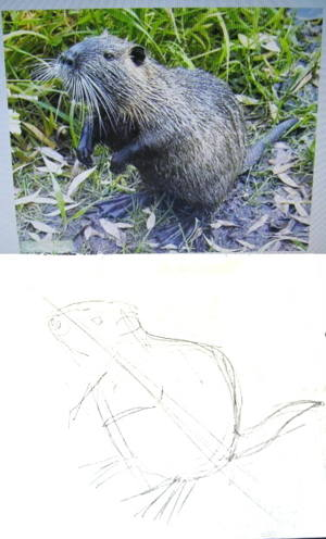 how to draw a Nutria