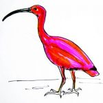 Ibis bird colored drawing/