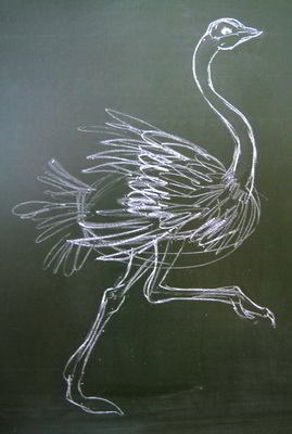 Ostrich drawing  step by step