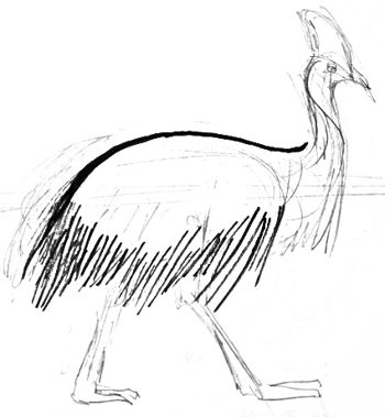 Cassowary body drawing