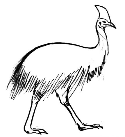 Cassowary line drawing