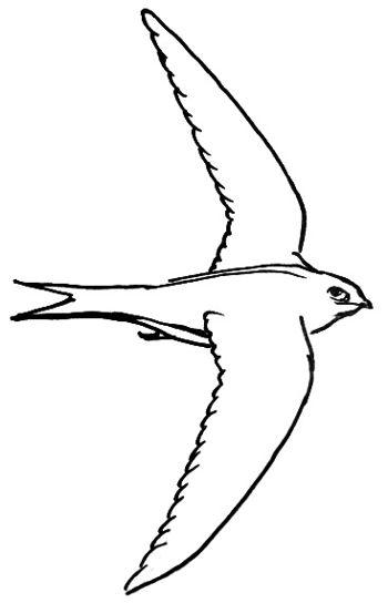 Swift line drawing