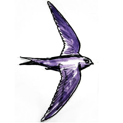 How to draw a Swift bird tutorial