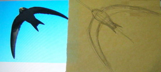 How to draw a swift flying