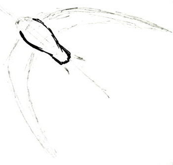 Swift bird drawing-2