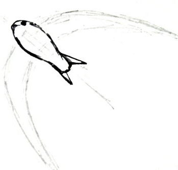 Swift bird drawing -4