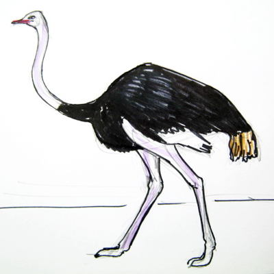 How to draw an African ostrich