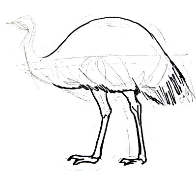 Emu drawing step by step