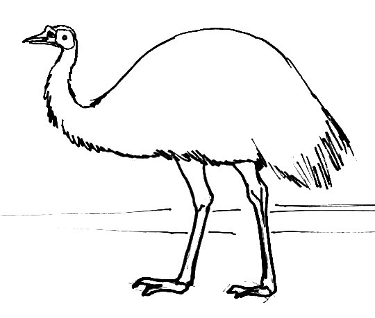 Emu outline