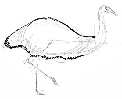 Emu body drawing