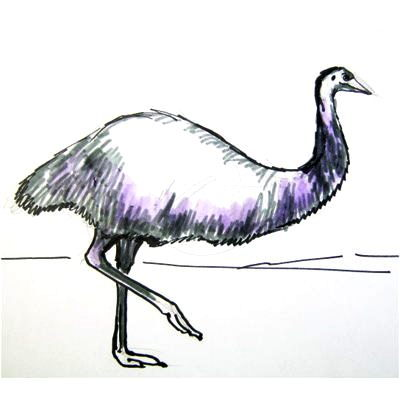How to draw Australian ostriches emu and the cassowary