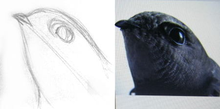 How to draw a Swift head