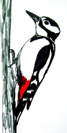 Woodpecker colored drawing