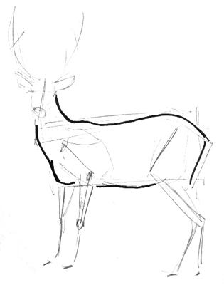Deer body drawing