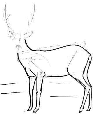 Deer drawing -2