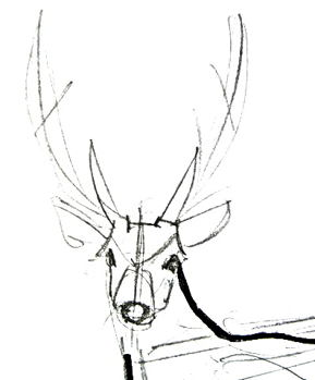 How to draw deer head