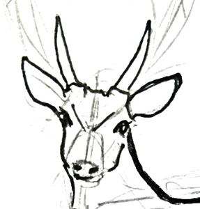 Deer face drawing