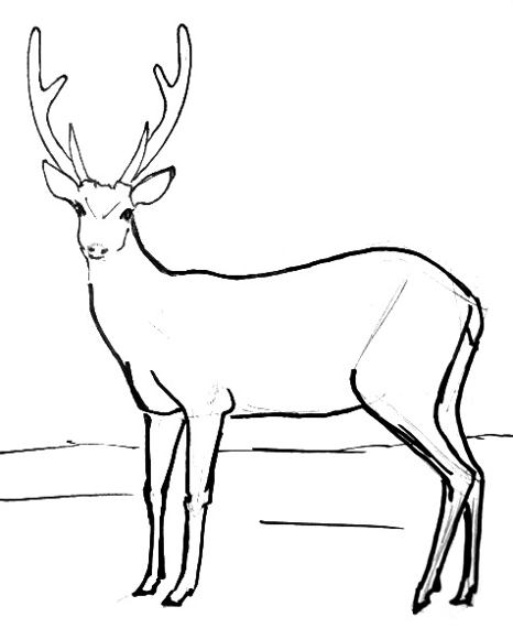 Deer Contour Line Drawing : How to draw a deer
