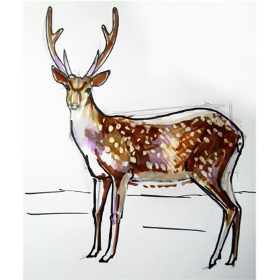 Deer  colored drawing-036